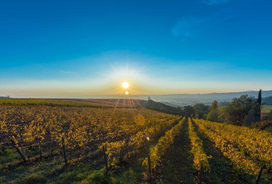 Il Cantico del vino
