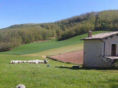 Azienda Agricola Massimiani Giovanni