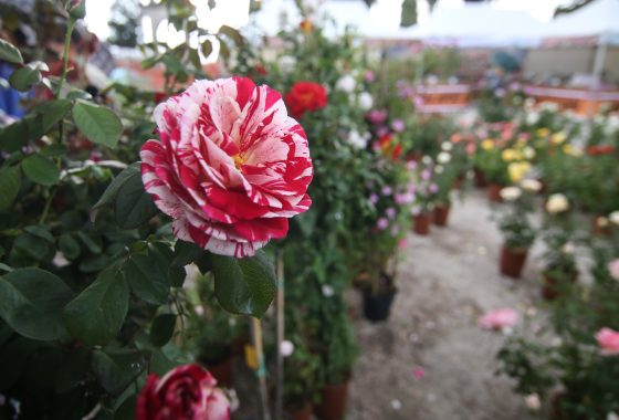 Perugia Flower Show - Winter Edition 2019