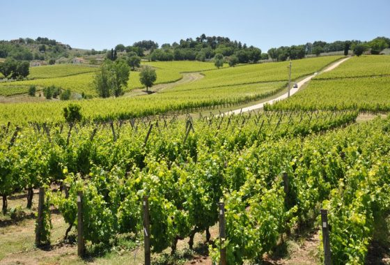 L'Olimpo dei vini