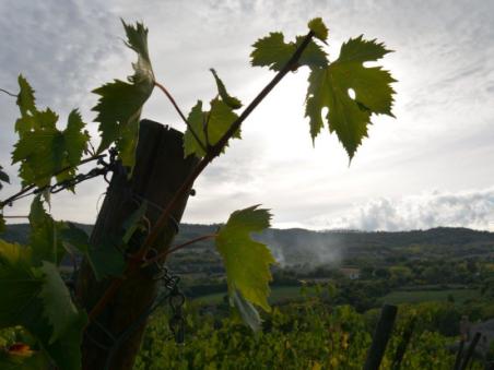 Cose impossibili da realizzare negli Stati Uniti: come un americano ha aperto la propria azienda vinicola in Italia