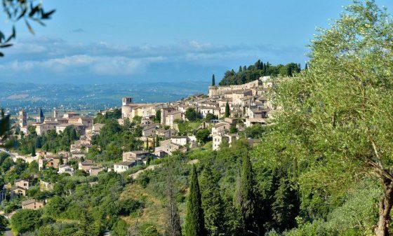 In Umbria, un olio di oliva italiano all'altezza degli elogi In Umbria
