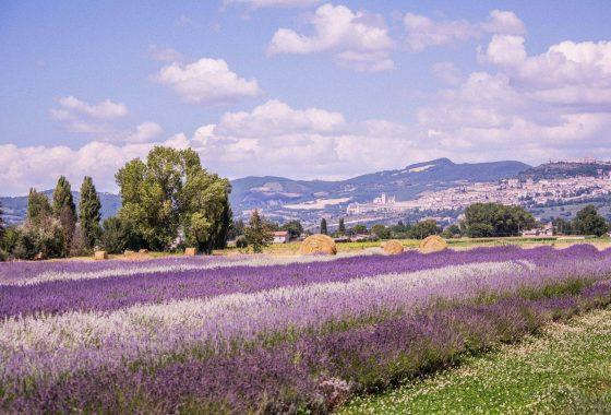 Week end al Lavandeto di Assisi, anima profumata dell'Umbria