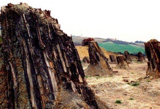 I giganti fossili di Dunarobba